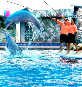 Dolphin Show at Oasis Sea park