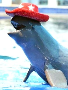 http://swimwithdolphins.information.in.th/images/irrawaddy-cowboy-dolphin.jpg